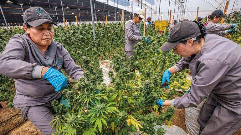 Ha cambiando el rostro de la industria del cannabis en EEUU