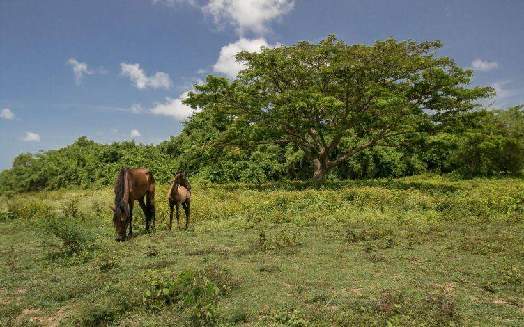 Cambiarían la protección agrícola a los terrenos de Vieques