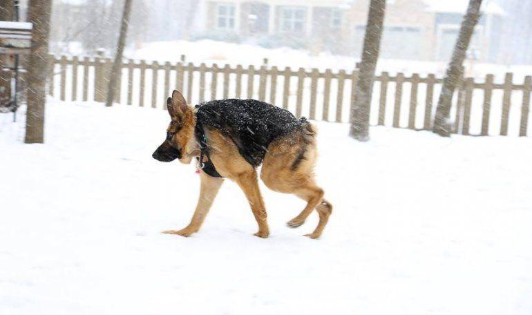 Perro con rara condición en su columna vertebral cautiva las redes