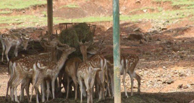 Explican las muertes recientes de animales en zoológico de Mayagüez
