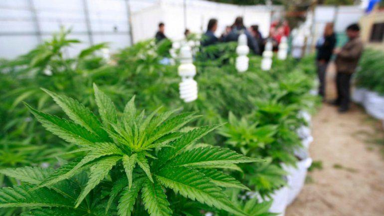 Salud hará acuerdo con CEE para agilizar licencias cannabis medicinal