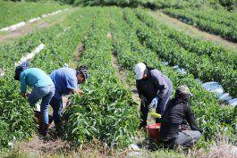 subsidiaran el 50% del salario minimo de los trabajadores de la agricultura