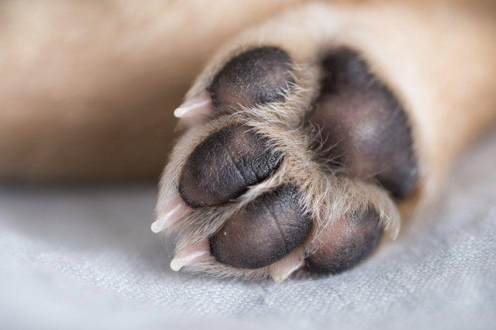 Radican cargos por crueldad animal contra un hombre que agredió a un perro en Río Piedras