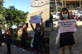 bajo presion popular, cuba anuncia un decreto ley que protege a los animales